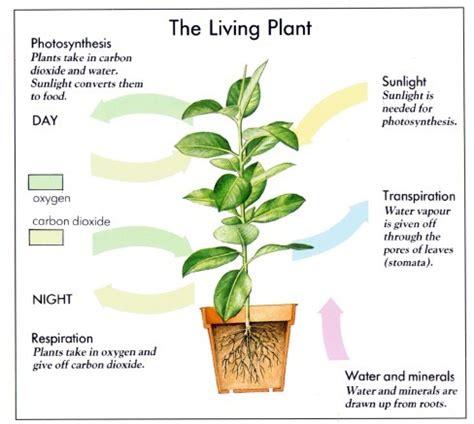 where do flowers grow how plants grow