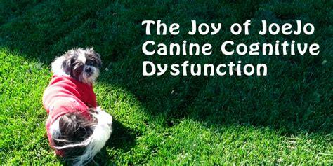 Dog Cognitive Dysfunction