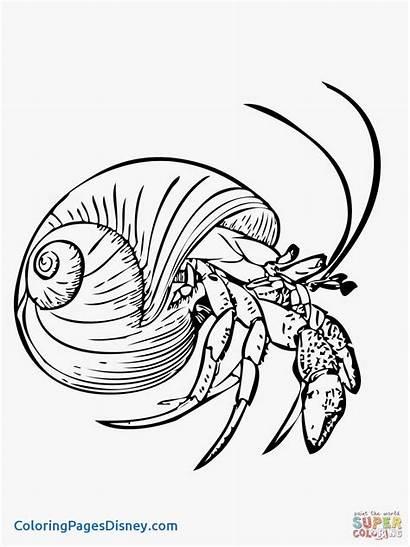 Shrimp Coloring Pages Printable Getcolorings Crustacean