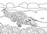 Alligator Coloring Pages Crocodile Cool2bkids Printable Animal Cartoon Colored sketch template