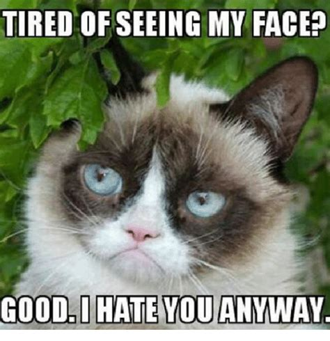 Tired Meme Face - tired ofseeing my face good i hate you anyway grumpy cat meme on sizzle
