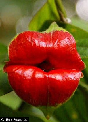 lips  jagger  plant    leaf