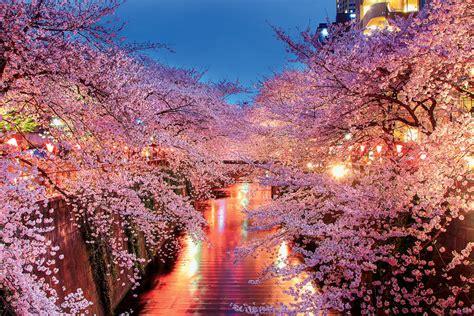 tokyo neighborhood spotlight     nakameguro