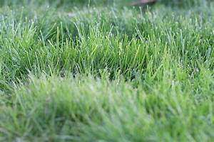 Rasen Nach Düngen Gelb : rasen sanden wann und womit mit sand zu einem satten gr n ~ Markanthonyermac.com Haus und Dekorationen