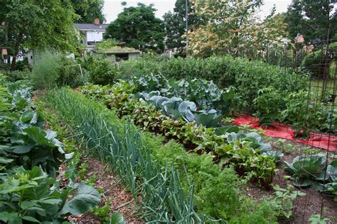 perfect time  prepare spring vegetable gardens