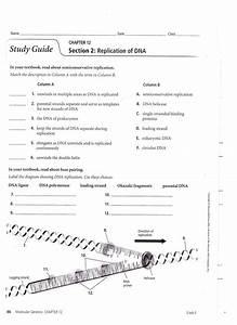 Dna Mutations Practice Worksheet Answer Key