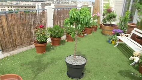 planter un arbre fruitier nain minutefacile