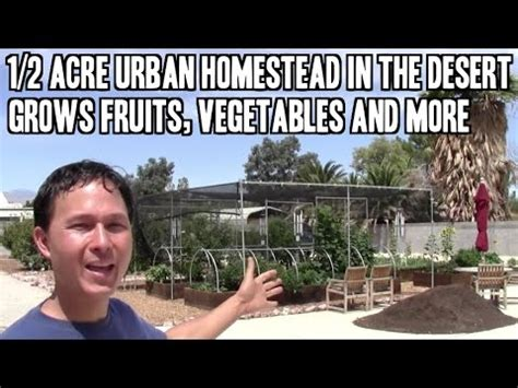 acre urban homestead   desert grows fruits
