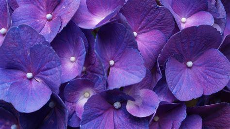 flower wallpapers   resolution crispme
