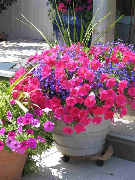 Container Red Flower Gardening Design Example