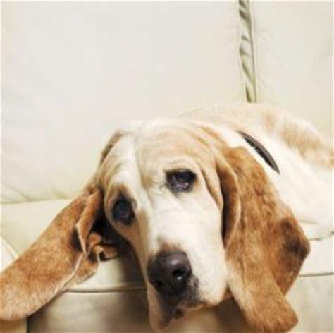 dog cancer symptoms     react