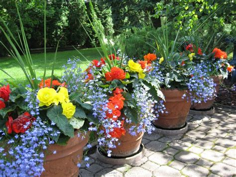 pictures of begonias in pots more lobelia and begonias container garden pinterest beautiful container gardening and