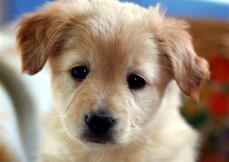 ein kleiner hund foto bild tiere haustiere hunde