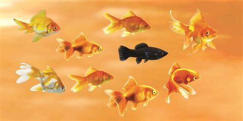 Feng Shui Gold Fish Painting