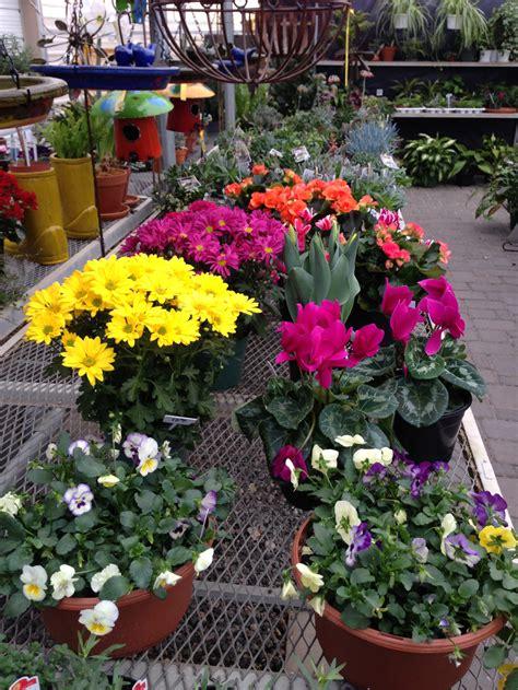 colorful seasons blooming plants colorful seasons alexandria mn