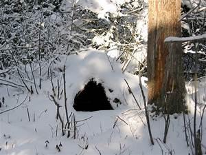 North American Bear Center - Winter Dens