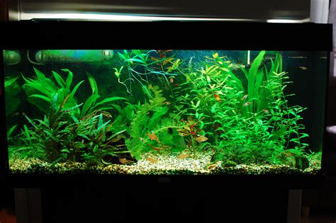 fish aquariums freshwater fish for aquariums freshwater aquarium fish