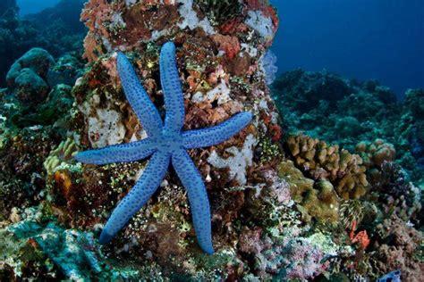 interesting facts  beautiful starfish world