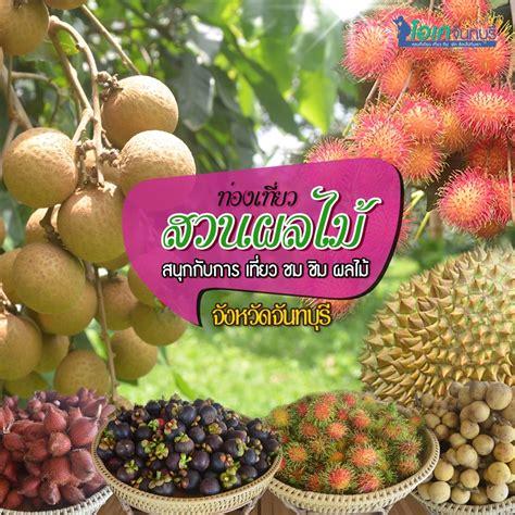 ท่องเที่ยว สวนผลไม้ จังหวัดจันทบุรี | OK Chanthaburi