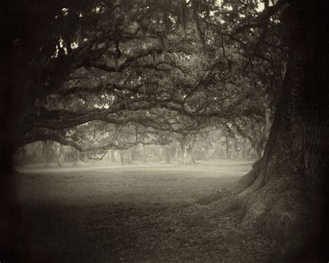 Artist Highlight Sally Mann Artfoundations108