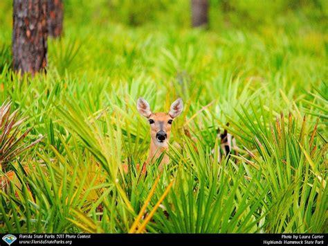 Boa Hammock by Highlands Hammock State Park Boa247