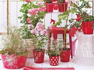 Blumenkästen Bepflanzen Ideen : balkon ideen f r jede himmelsrichtung balkon garten balkon ideen balkon und garten ~ Eleganceandgraceweddings.com Haus und Dekorationen