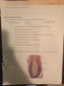 Solved  The Integumentary System  Please Answer Questions