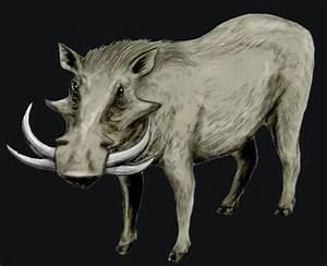 East African Pliocene Mammals Contest  Metridiochoerus