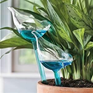 Pflanzen Bewässern Urlaub : tipps wie sie w hrend des sommerurlaubs die pflanzen bew ssern k nnen ~ Watch28wear.com Haus und Dekorationen