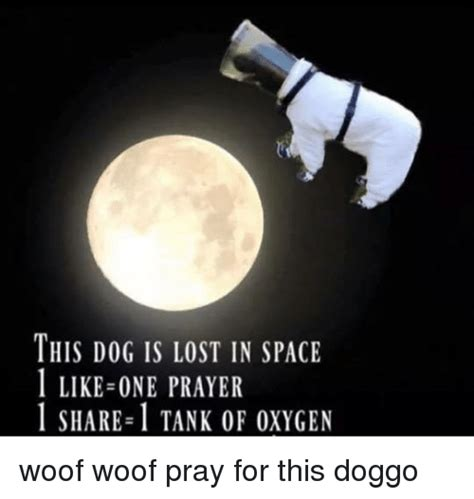1 Like 1 Prayer Meme - this dog is lost in space 1 like one prayer 1 share 1 tank of oxygen woof woof pray for this