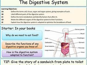 Digestive System Adaptations