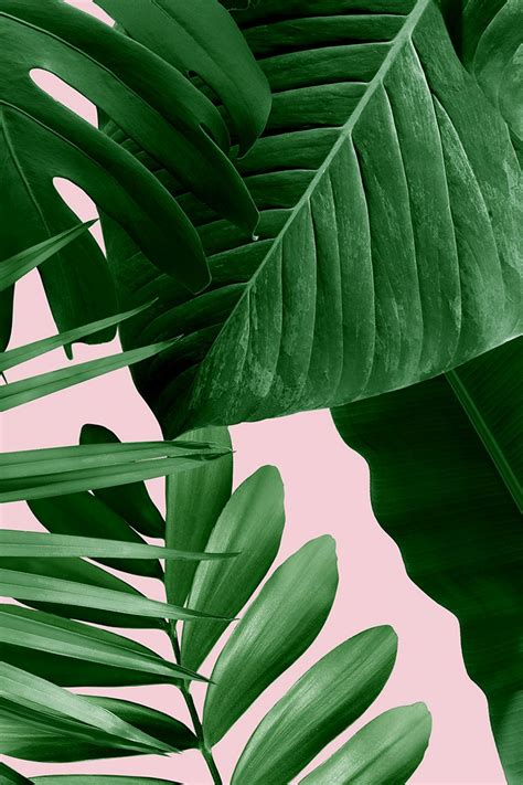 menakjubkan  foto wallpaper daun richa wallpaper