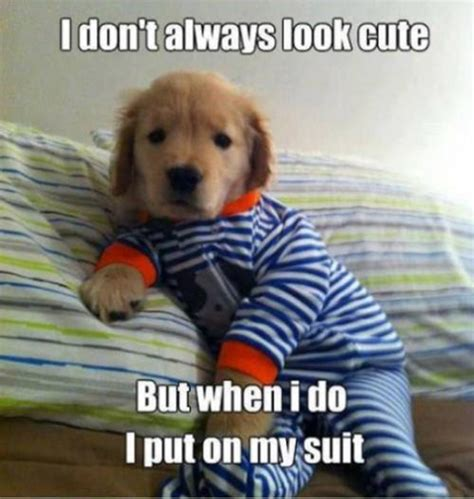 Cute Puppy Memes - 18 funny pictures that make you laugh out loud