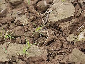 DOE-Funded Work Could Lead to Advances in Bioenergy ...