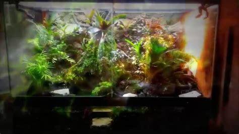 epic rainforest paludariumvivariumterrarium setup youtube