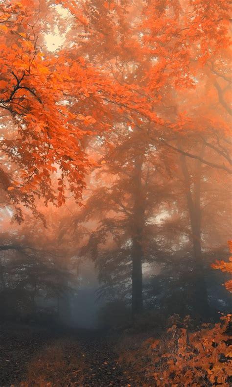 Autumn Hd Wallpapers For Nokia Lumia 920  928 1020
