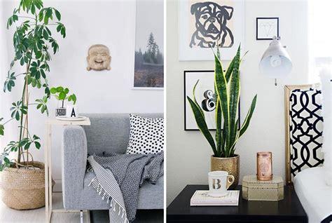 quelle plante mettre dans chaque piece de la maison
