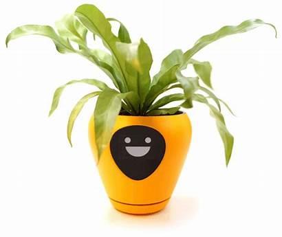 Smart Planter Lua Pet Plant Virtual Animated
