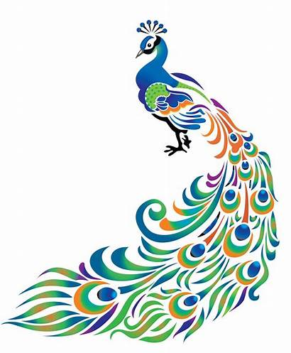 Peacock Cliparts Feather Clip Cartoon Drawing Clipart