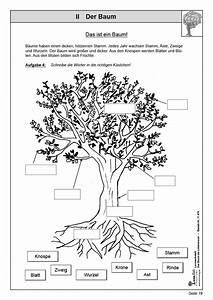 Was Ist Das Für Ein Baum : kohl verlag lernwerkstatt der baum als lebensraum ~ Watch28wear.com Haus und Dekorationen