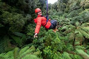 Canopy Tours Gallery | New Zealand Native Forest Eco Adventure