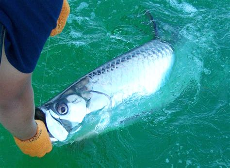 florida fishing keys marathon tarpon charters april monthly bait seasquared johnson chris forecast capt