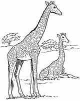Giraffe Coloring Fun Stumble Tweet sketch template