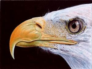 Samuel Silva's Incredible Photorealistic Ballpoint Pen ...