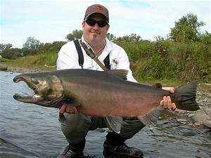 My Almost-Record Coho Salmon | Flickr - Photo Sharing!
