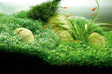 How To Aquascape A Freshwater Aquarium by How To Aquascape Small Tanks Practical Fishkeeping