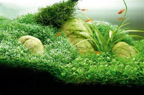 how to aquascape a freshwater aquarium how to aquascape small tanks practical fishkeeping