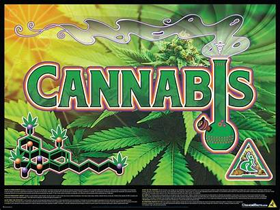 Poster Cannabis Educational Shipping Posters
