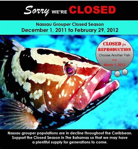 grouper nassau closed season starts 1st december