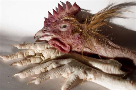 comment cuisiner les tripes les pattes de poulet cuisine